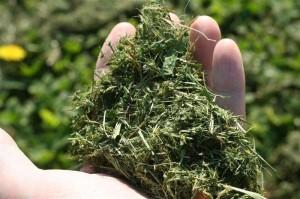 turf grass cuttings